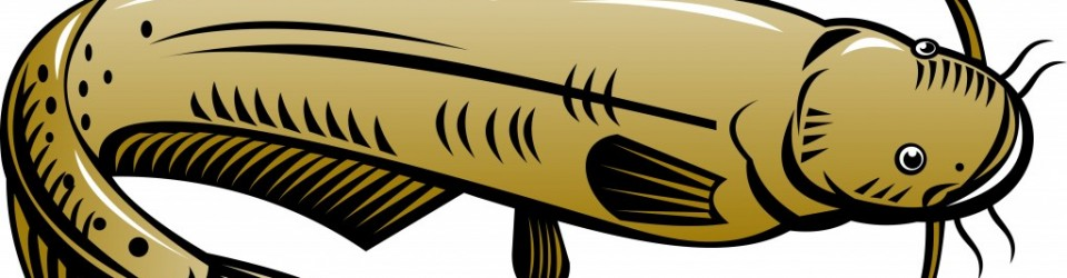 catfish_illustration-1024x537